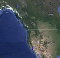 Herring Gull Location Map