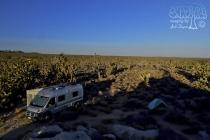 Scenery Near Cima Camp at Daybreak