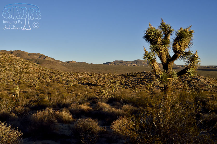 scenery_d727703-joshuatree