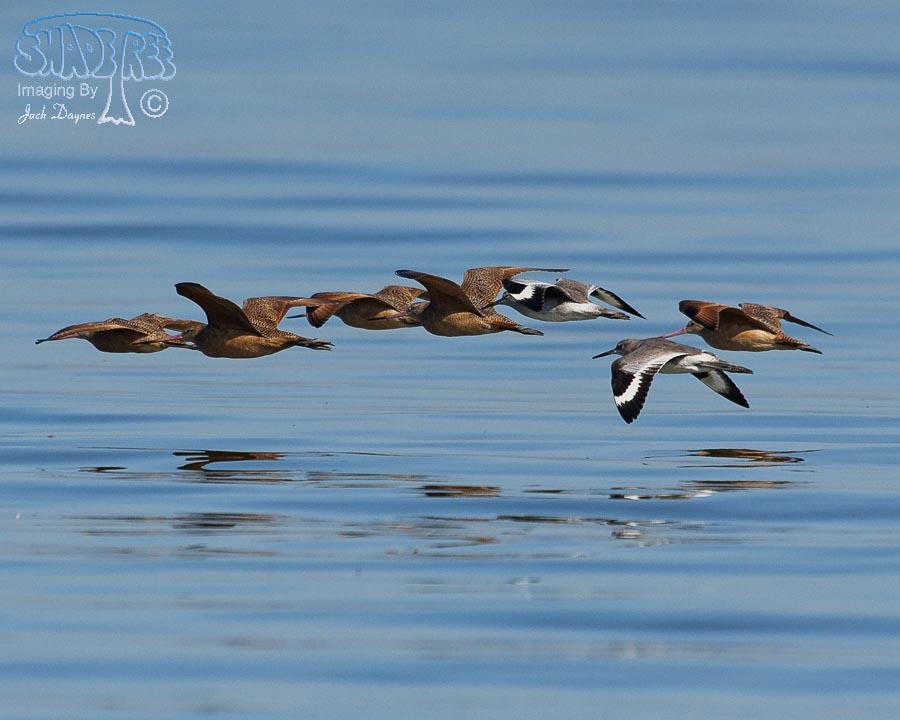 Mixed Flock in Flight - n/a