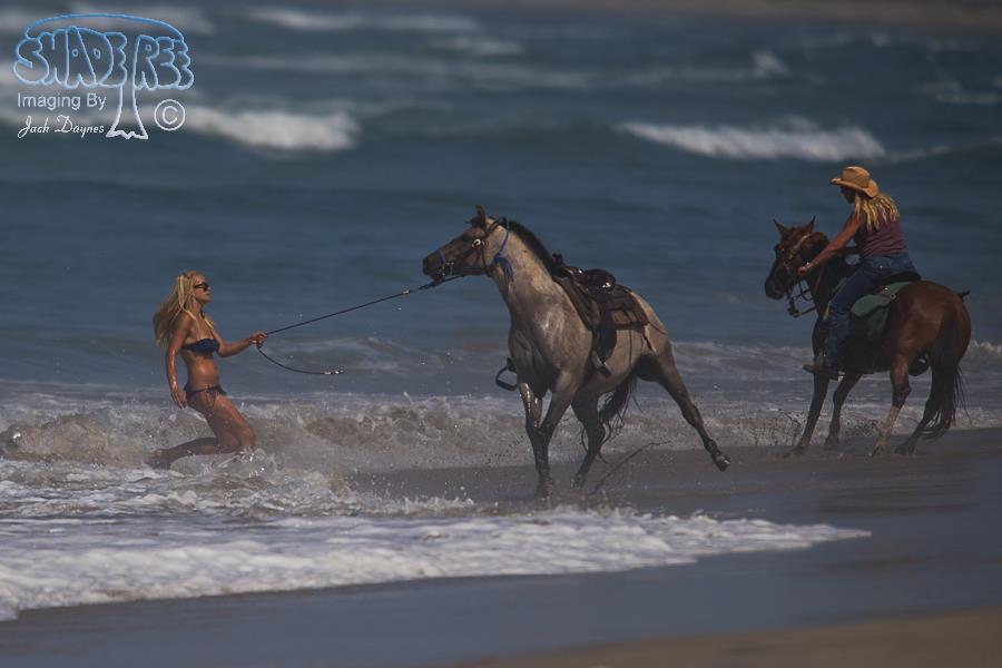 Horse Training - Equus ferus caballus