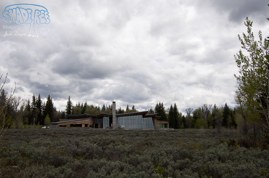 Moose Wyoming - n/a
