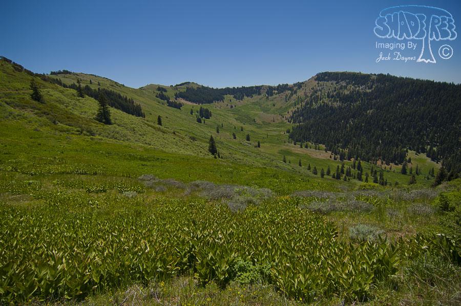 Alpine Views - n/a