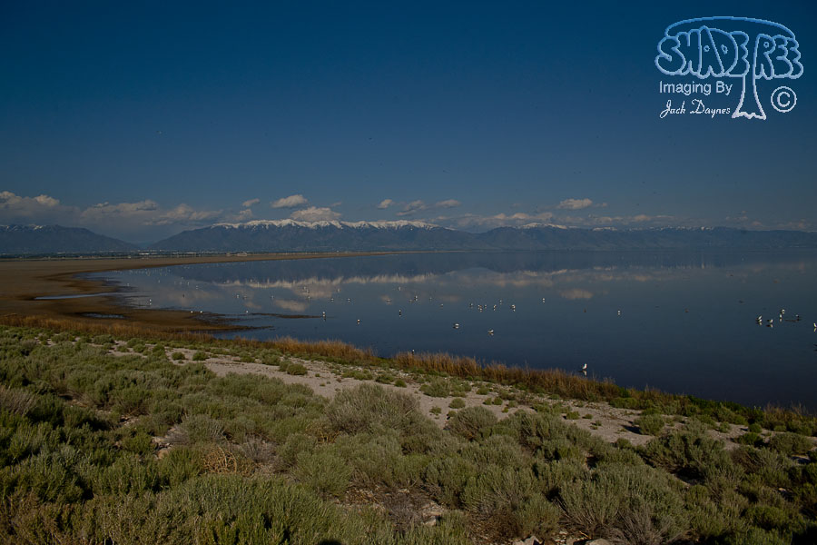 Scenery at Antelope Island - Scenery