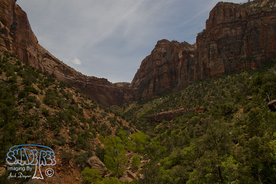 Scenes From Zion - n/a