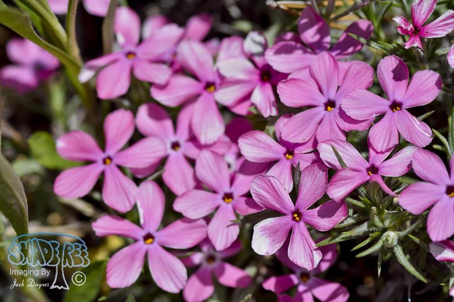Unknown Flower - Unknown