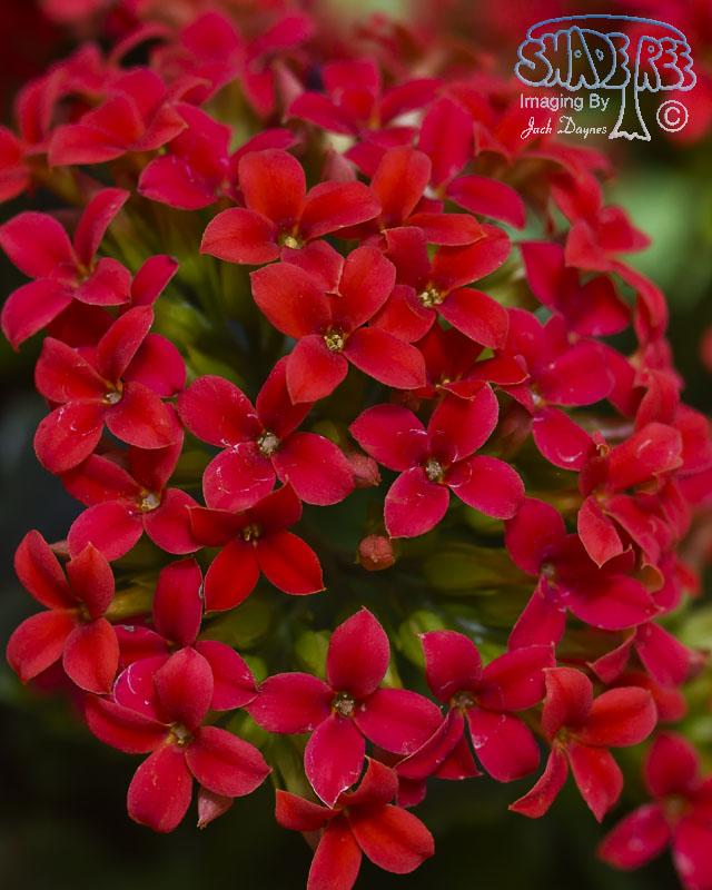Flower - Unknown