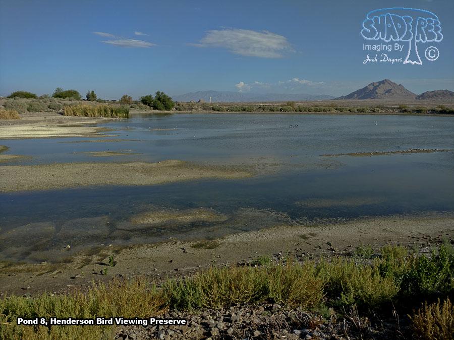 Pond 8 - Scenery