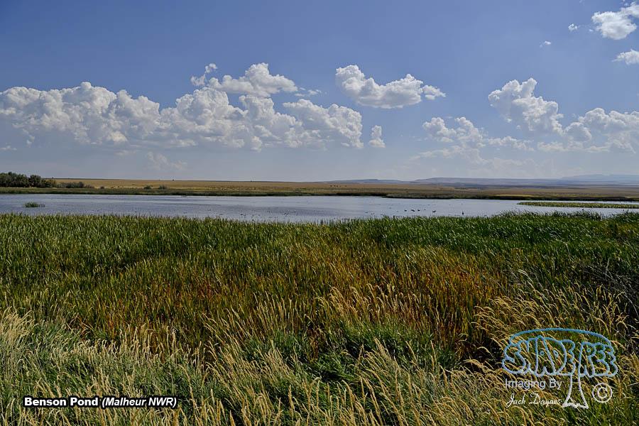 Benson Pond - Scenery