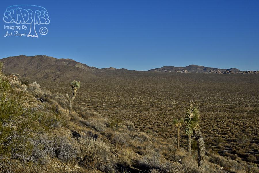 Desert Sunrise - n/a