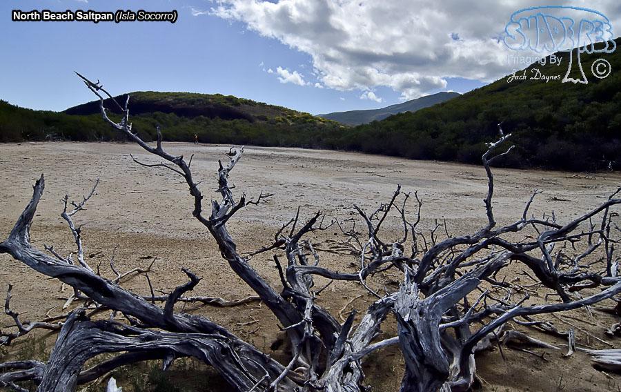 Saltpan Behind The Mangroves - Isla Socorro