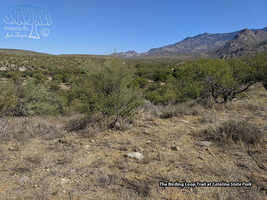 Catalina State Park - Scenery