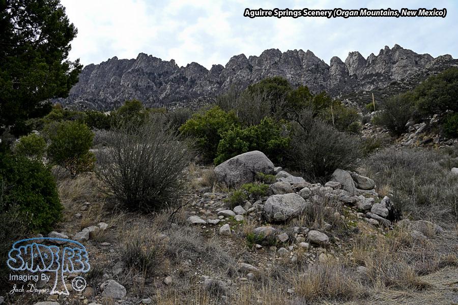 Aguirre Springs Scenery - Scenery