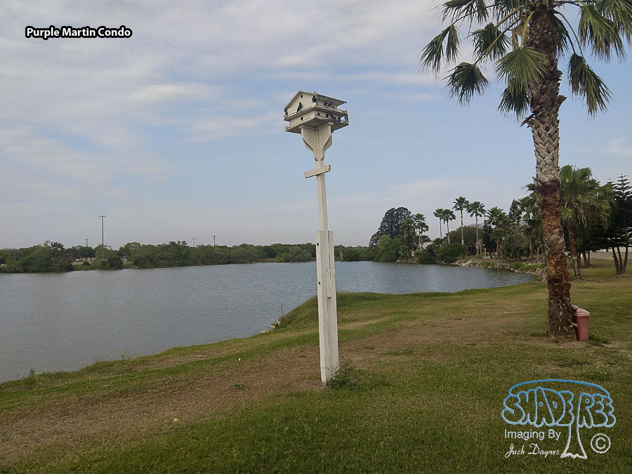 Purple Martin Condo - Scenery