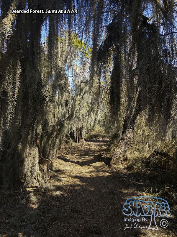 Bearded Forest - Scenery